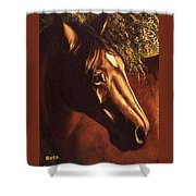 Bay Horse Art Horse Portrait Circe At Sunset Shower Curtain