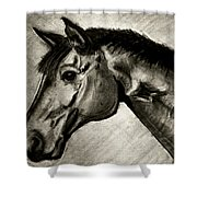My Friend The Bay Horse Shower Curtain