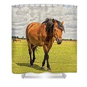 Bay Pony Shower Curtain