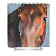 Thoroughbred Royalty Shower Curtain
