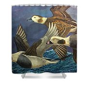 Bay Runners Shower Curtain