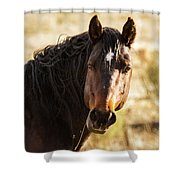 Bay Stallion Of Piceance Basin Shower Curtain