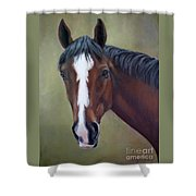 Bay Thoroughbred Horse Portrait Ottb Shower Curtain