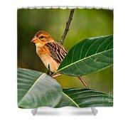 Baya Weaver Shower Curtain