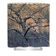 Bb's Tree 2 Shower Curtain