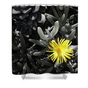 Be Different Shower Curtain by Lynn Geoffroy