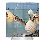 Beach Art - Seashell Shrine - Sharon Cummings Shower Curtain