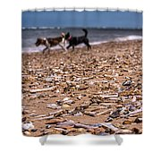 Beach Dogs Shower Curtain