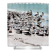 Beach Flock Shower Curtain