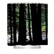 Beach Forest Shower Curtain