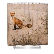Beach Fox Shower Curtain