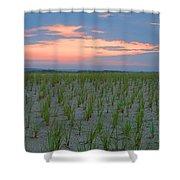 Beach Grass Farm Shower Curtain