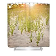 Beach Grasses Number 3 Shower Curtain