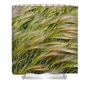 Beach Grasses Shower Curtain