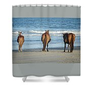 Beach Horses Shower Curtain