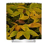 Beach Leaves Shower Curtain