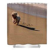 Beach Puppy Shower Curtain