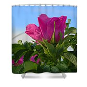Beach Rose Shower Curtain