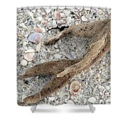 Beach Scape Shower Curtain