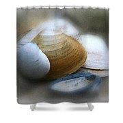 Beach Shells Shower Curtain