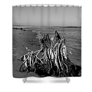 Beach Stump Shower Curtain