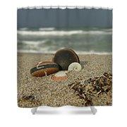 Beach Treasures 1 Shower Curtain