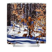Beach Tree's In Winter Shower Curtain