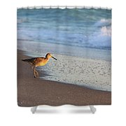 Beachcomer Shower Curtain