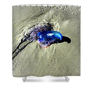 Beached Jellyfish 001 Shower Curtain