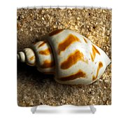 Beached Shell Shower Curtain