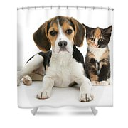 Beagle And Calico Cat Shower Curtain