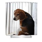 Beagle Attitude Shower Curtain