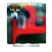 Beagle Beba Portrait Shower Curtain