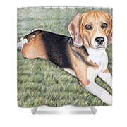 Beagle Shower Curtain