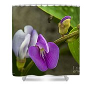 Beaked Butterfly Pea 9 Shower Curtain