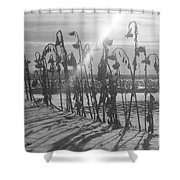 Beam Of Light Shower Curtain