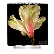 Beaming With Joy Shower Curtain