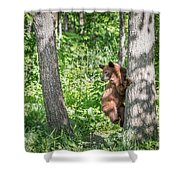 Bear Cub Climb Shower Curtain