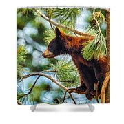 Bear Cub In A Tree 3 Shower Curtain