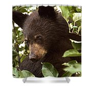 Bear Cub In Apple Tree2 Shower Curtain