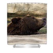 Bear Dip Shower Curtain