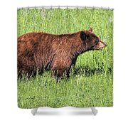 Bear Eating Daisies Shower Curtain