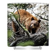 Bear In Trees Shower Curtain