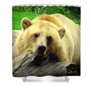 Bear On A Log Shower Curtain