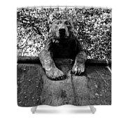 Bear On The Wall Shower Curtain