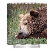 Bear Sleeping Shower Curtain