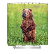 Bear Standing Tall Shower Curtain