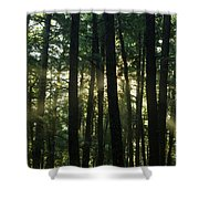 Bearcamp River Trail - Sandwich, New Hampshire Shower Curtain by Erin Paul Donovan