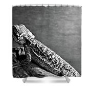 Bearded Dragon Shower Curtain
