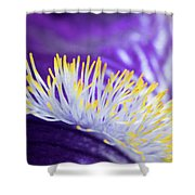 Bearded Iris Macro Shower Curtain